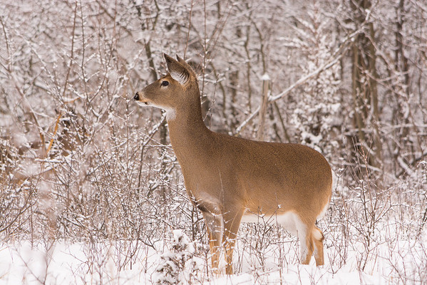 20140202-_DSC5224-Troy-MNature-Center.jpg