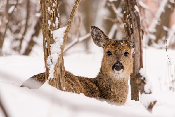 20140202-_DSC5106-Troy-MNature-Center-2.jpg