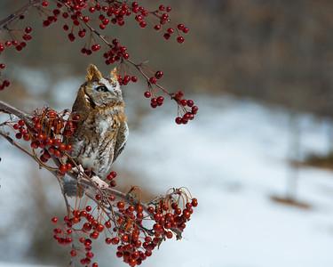 20140316-DSC_8319-Howell Nature Center.jpg